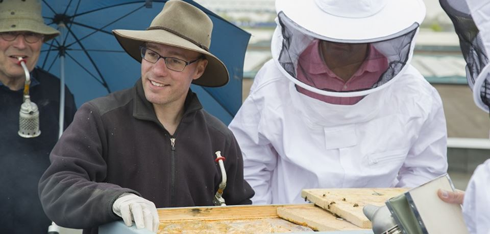 Bee-keeping at Tembo head office